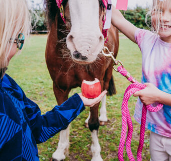 Meet Mac the Pink Lady® pony and his girl gang